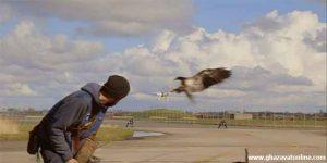 حمله عقاب به پهباد